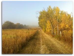 Foggy Autumn Picd