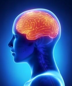 brain x-ray woman