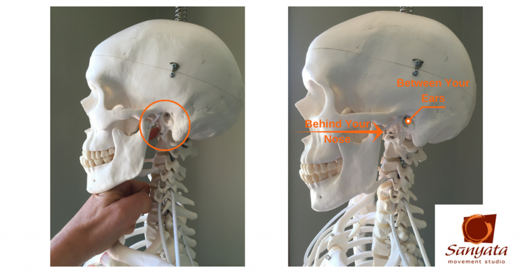 Where Your Head Rests On Your Spine