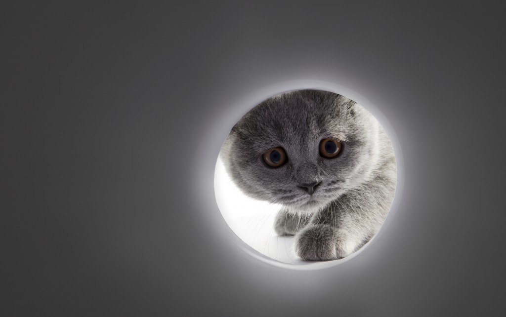A gray cats face looking into a tunnel