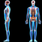 How to Improve Posture Effortlessly The Feldenkrais® Way Blog Post