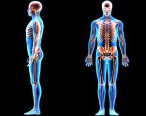 Improve Posture Effortlessly Image